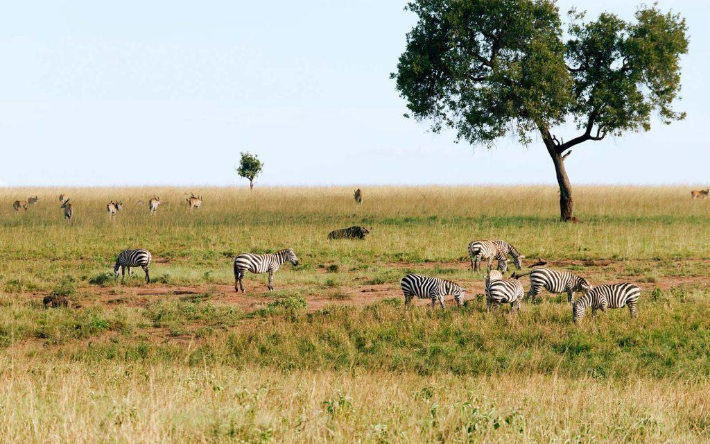 Kidepo Valley safari game drive