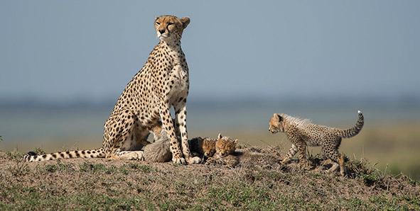 Masai Mara Safari Destinations in kenya