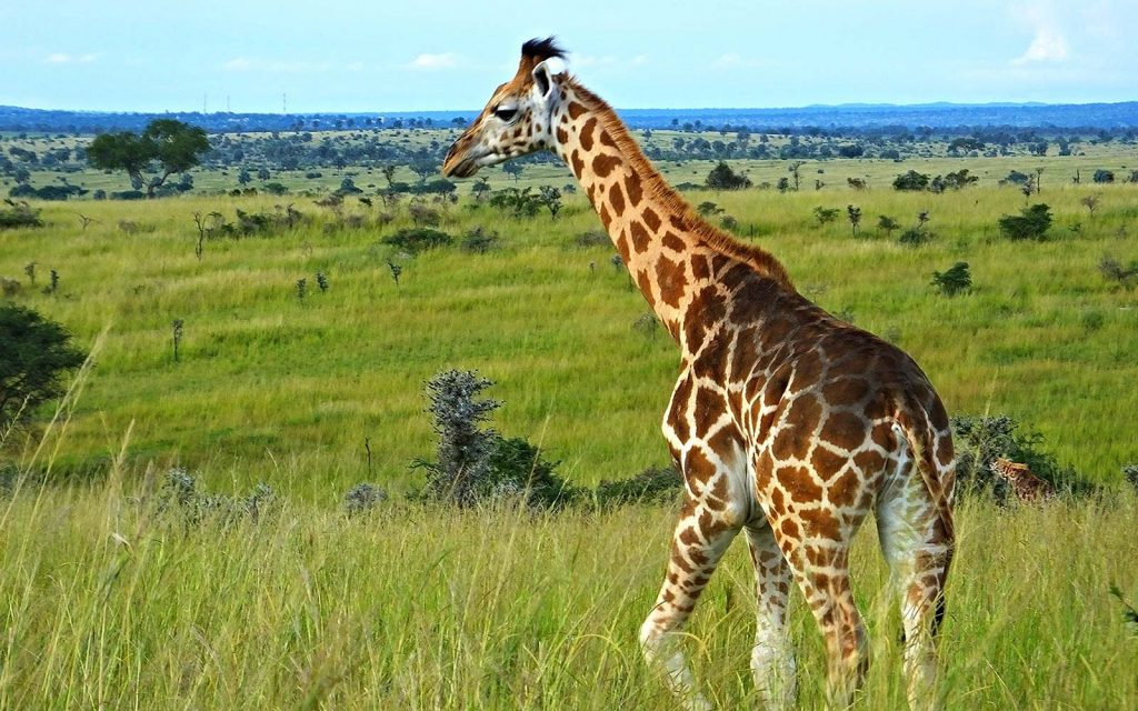 Africa safari Wildlife Game Drives