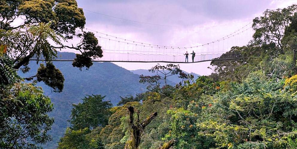 Nyungwe Forest Rwanda Canopy Walk