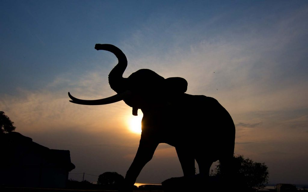 9 Days Gorillas, Chimpanzees & Wildlife Safari