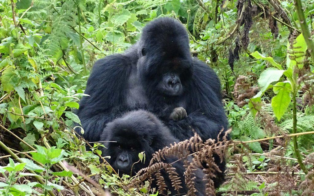 Explore Uganda & Uganda Safari