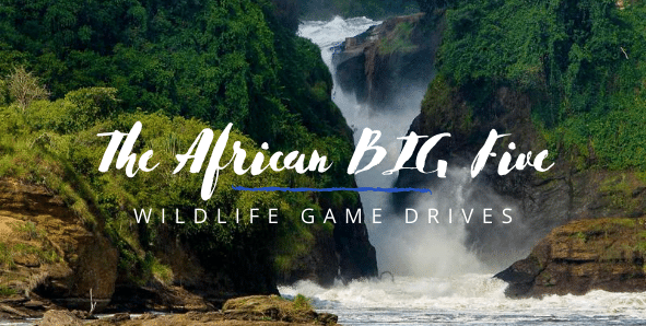 Africa Big five in Murchison Falls National Park