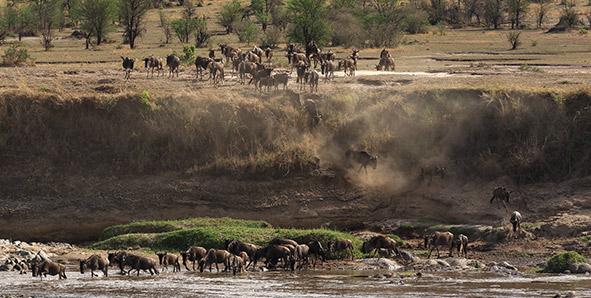 Serengeti Africa safari destination